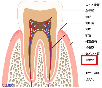 どうして歯は動くの?